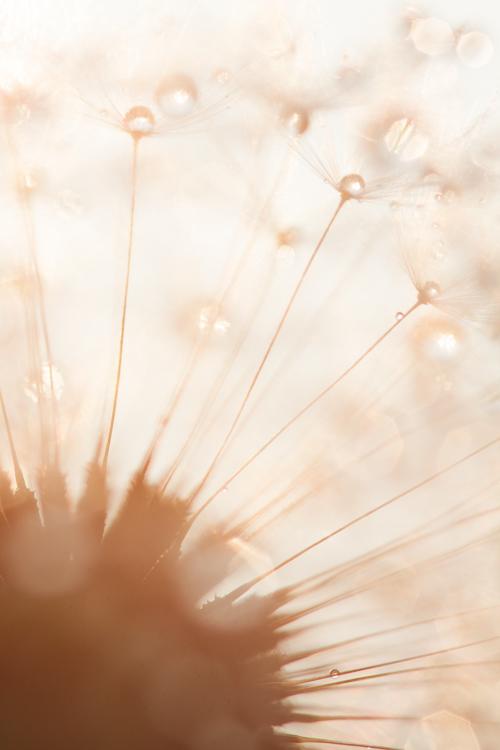 flower photography macro dandelion - Common Macro Photography Mistakes