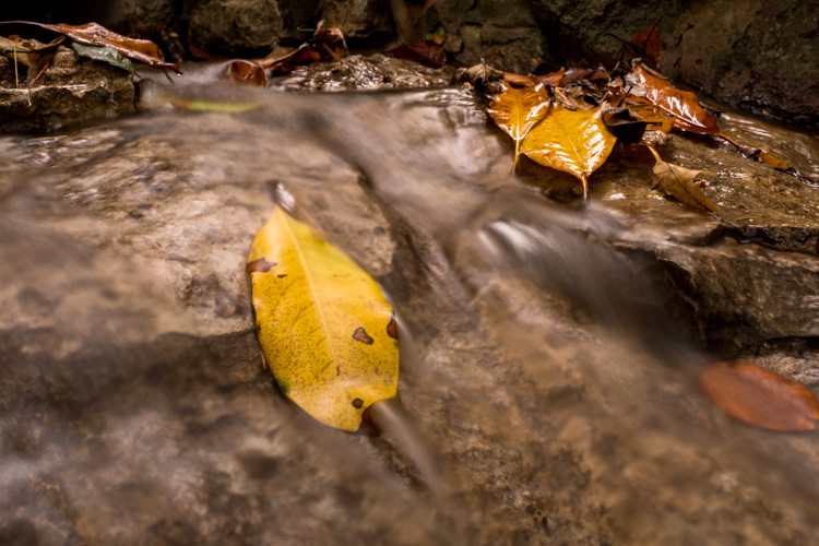 How to Create Silky Smooth Water Effects - yellow leaf in flowing water