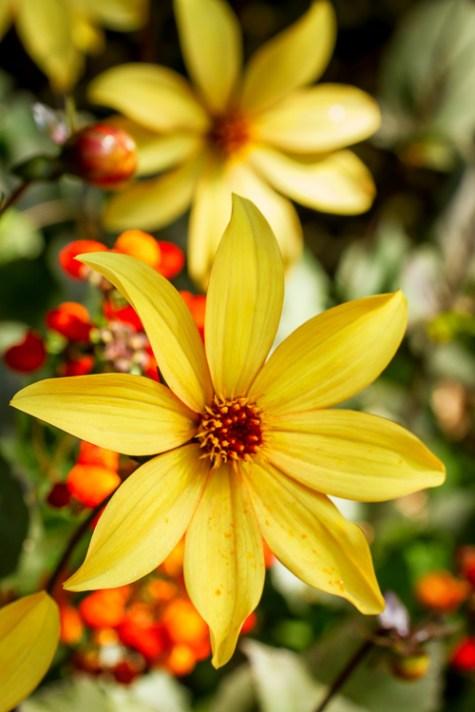 黄色的花朵 -  8种方法来创造更多的戏剧性花卉照片