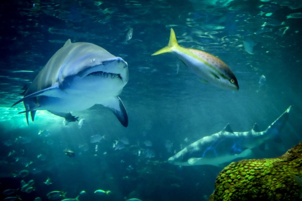 How to Take Clear and Creative Photos at Aquariums