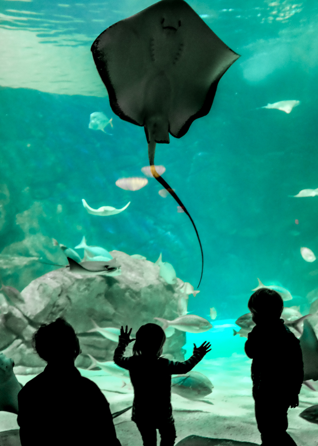 A silhouette photo of people watching a manta ray. How to Take Clear and Creative Photos at Aquariums