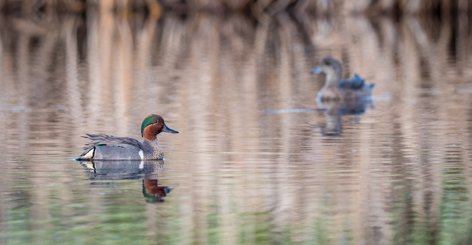 A Guide to Photographing Birds and Wildlife in a Wetland Area
