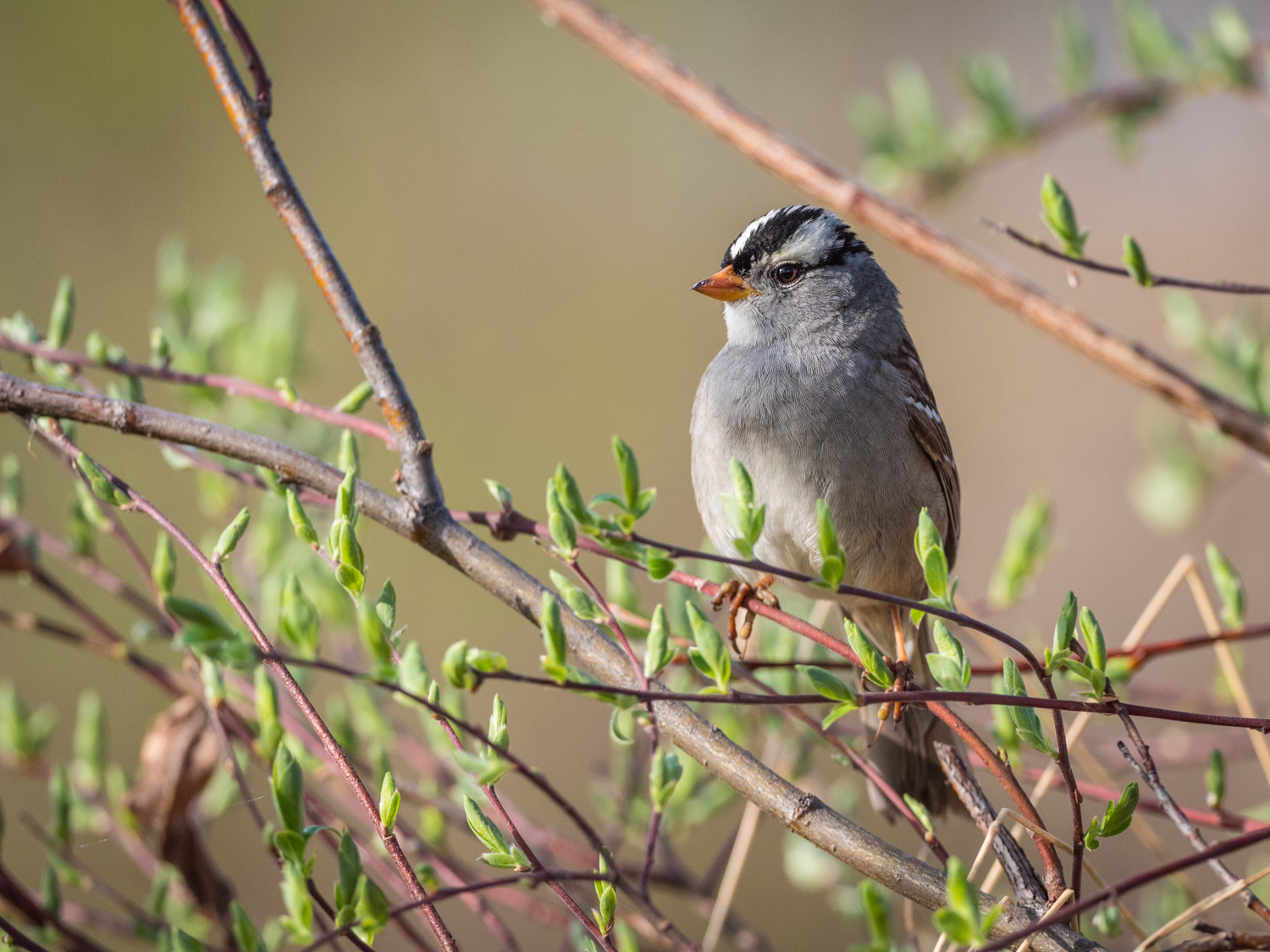 A Guide to Photographing Birds and Wildlife in a Wetland Area - bird in a tree