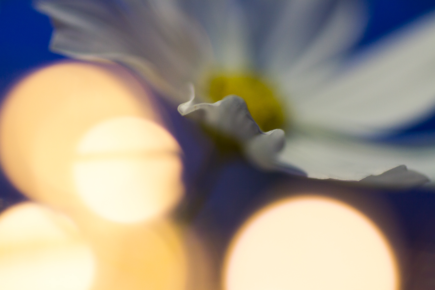 creative macro photography fairy lights flower cosmos bokeh