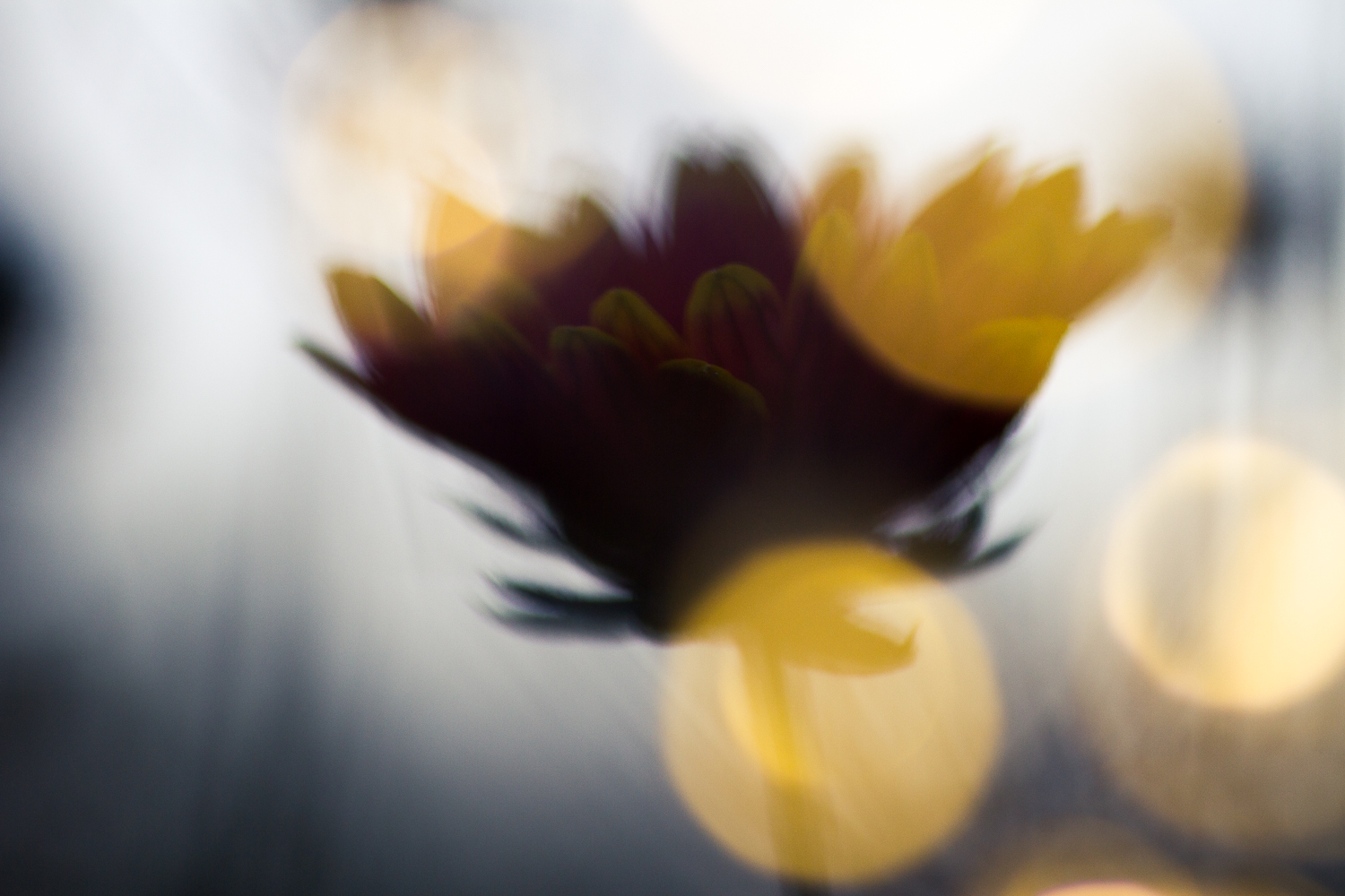 fairy light macro photography flower abstract