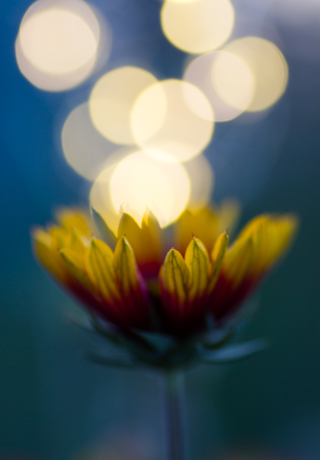 fairy light creative macro photography flower bokeh