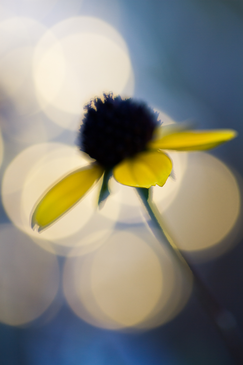 fairy light creative macro photography flower