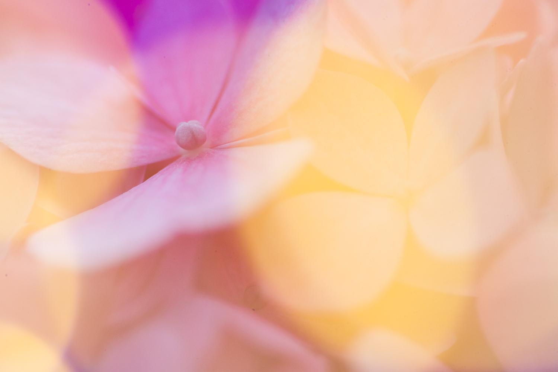 fairy light creative macro photography flower bokeh