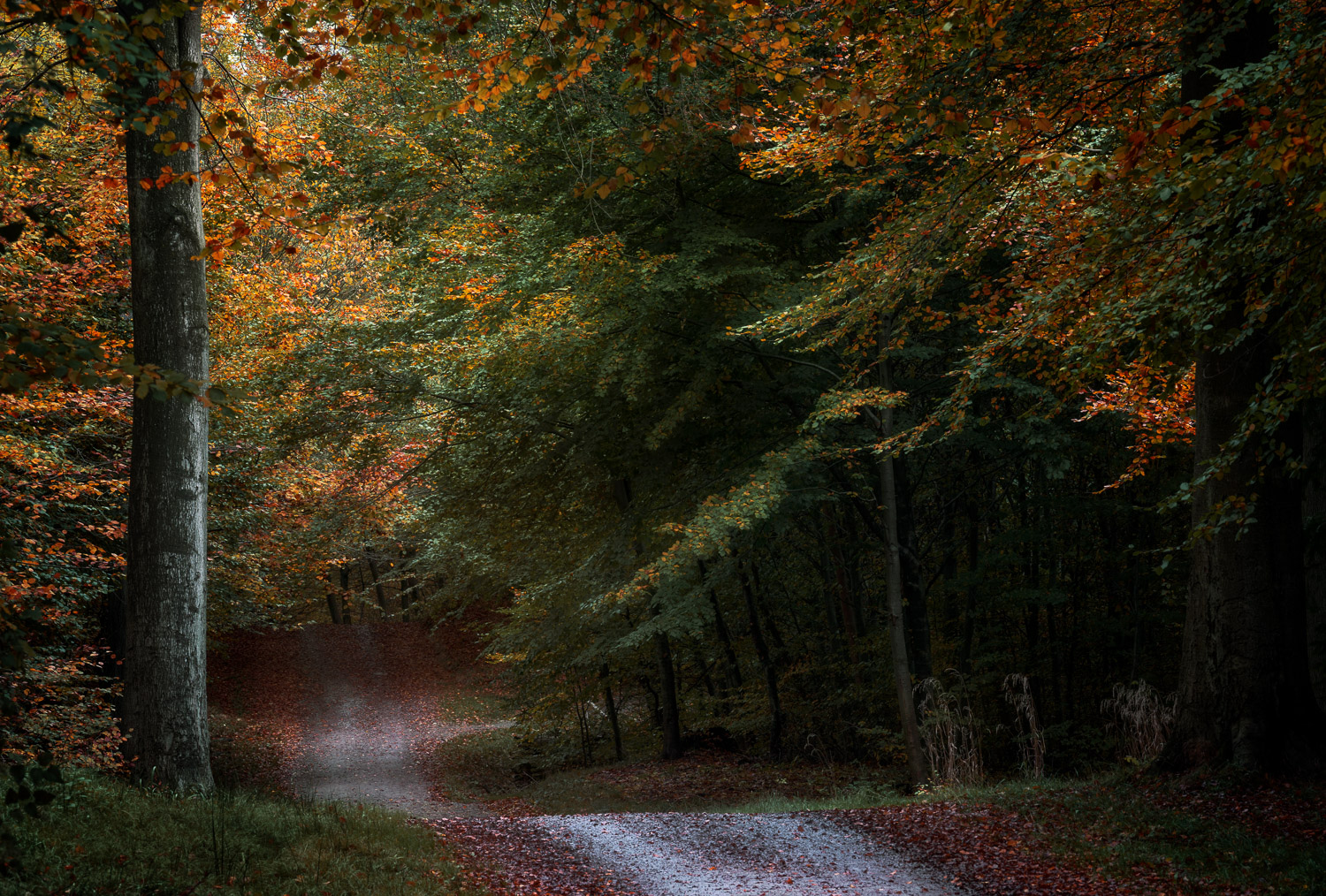 Why You Should Avoid Shooting at Small Apertures Like F18 to F40 - forest and pathway