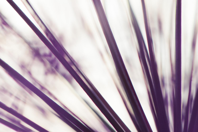 flower macro photography focus