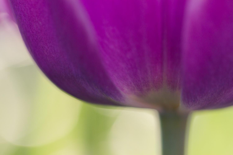 chụp macro bokeh hoa tulip - Các loại ánh sáng