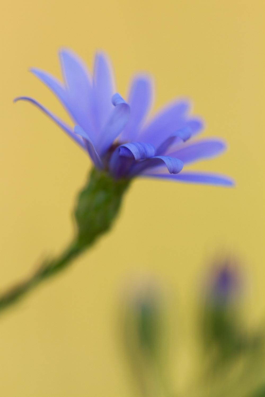 purple flower - Types of Lighting