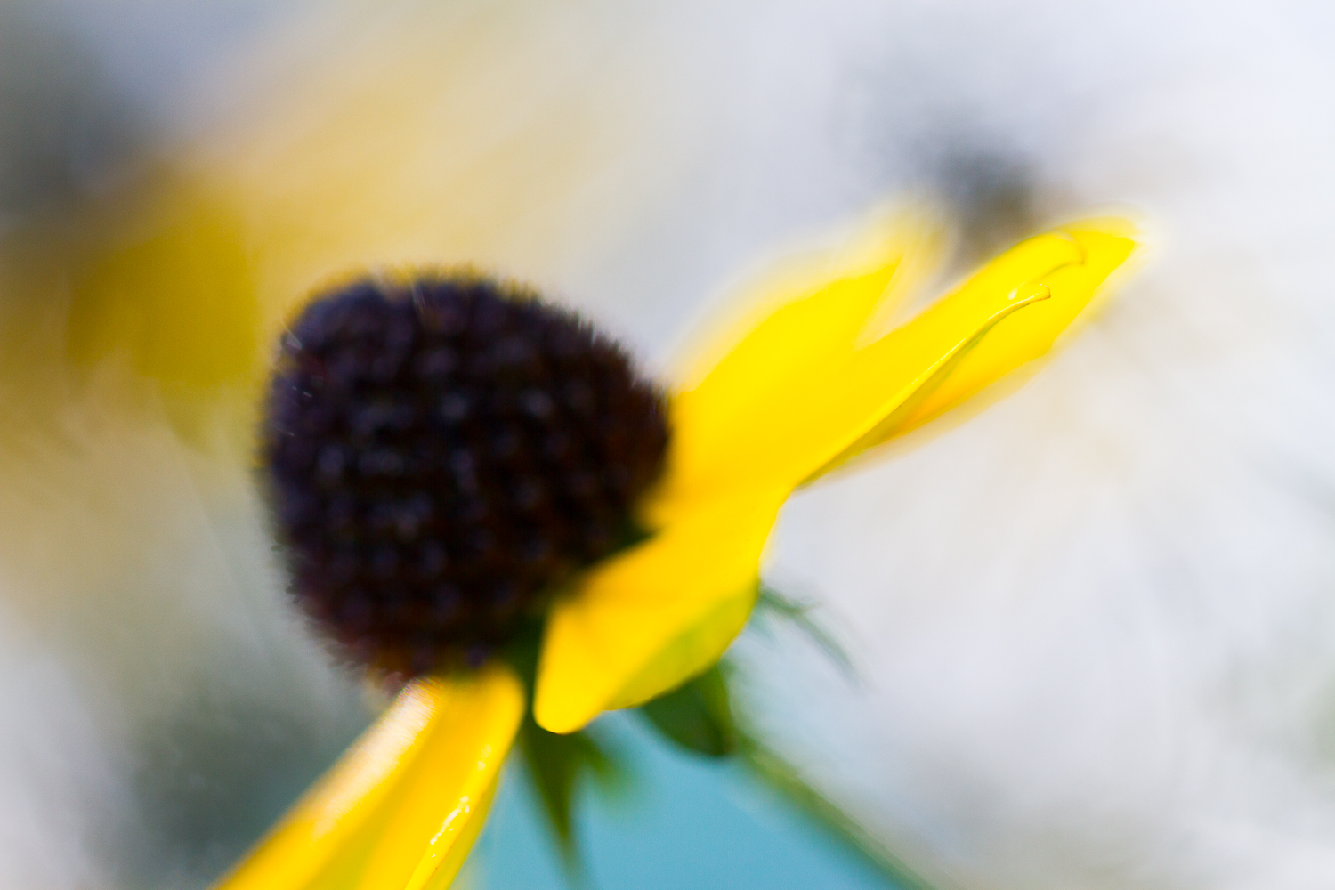 macro flower bokeh photography - Four Ways to Generate Stunning Bokeh in Your Images