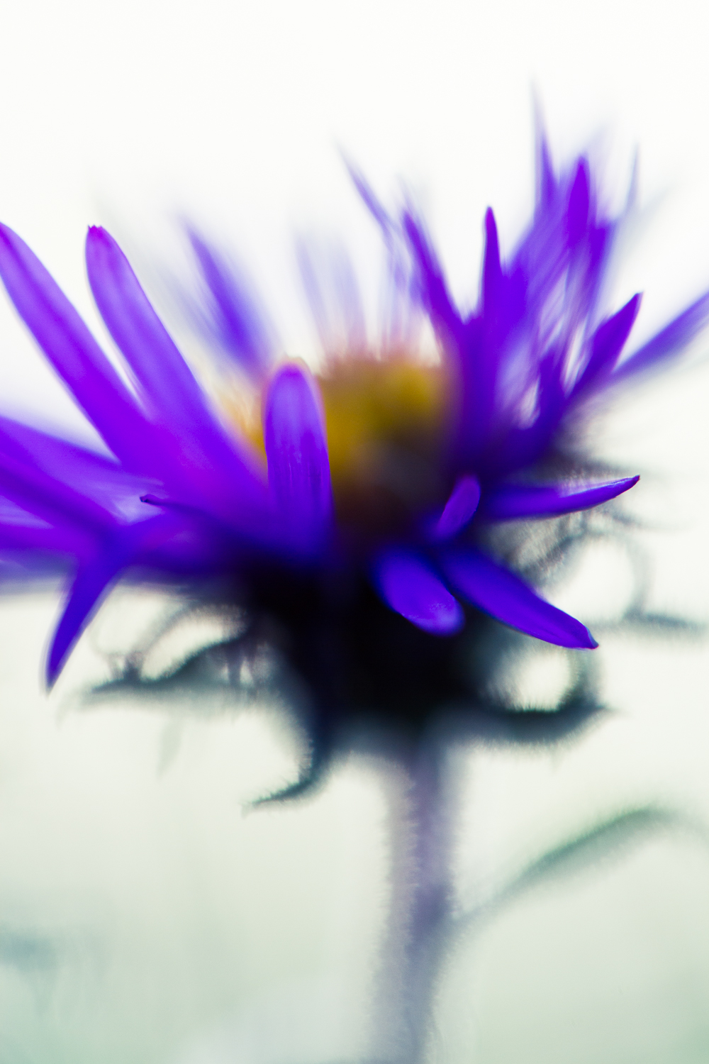 macro flower bokeh photography aster - Four Ways to Generate Stunning Bokeh in Your Images
