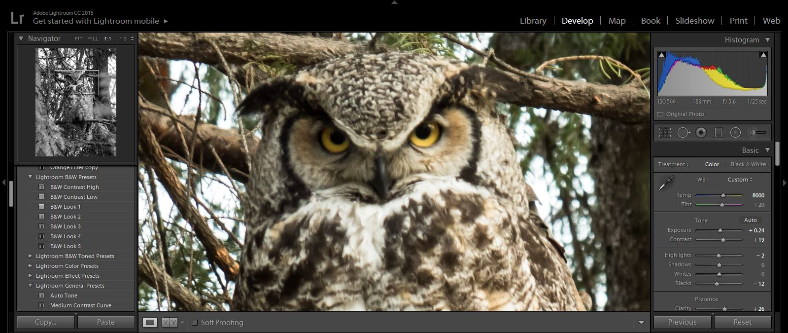 owl in Lightroom - micro four-thirds for wildlife
