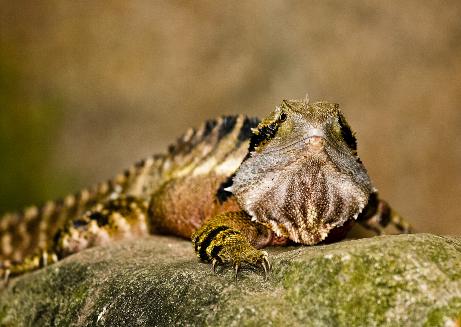 How Aesthetic Differs From Photographic Style And Why it Matters- photo of a lizard