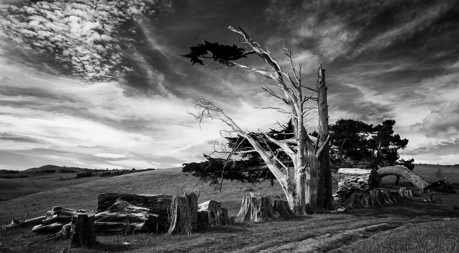 How Aesthetic Differs From Photographic Style And Why it Matters - black and white dramatic old tree photo