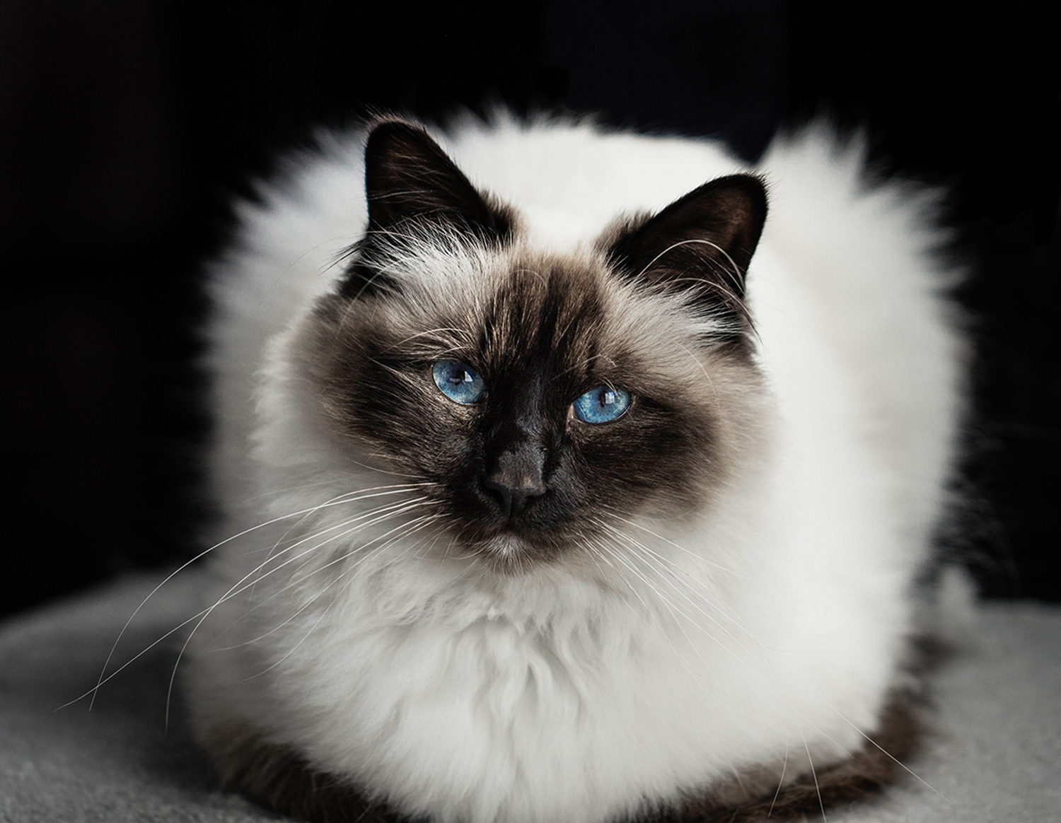 How Aesthetic Differs From Style And Why it Matters - photo of a cat