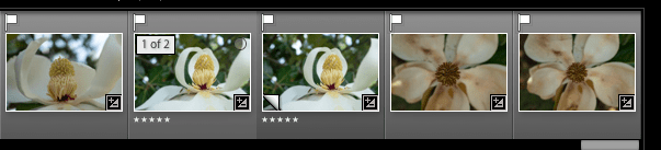 How to Use the Lightroom Editing Trifecta: History, Snapshot, and Virtual Copies - virtual copy in thumbnail strip