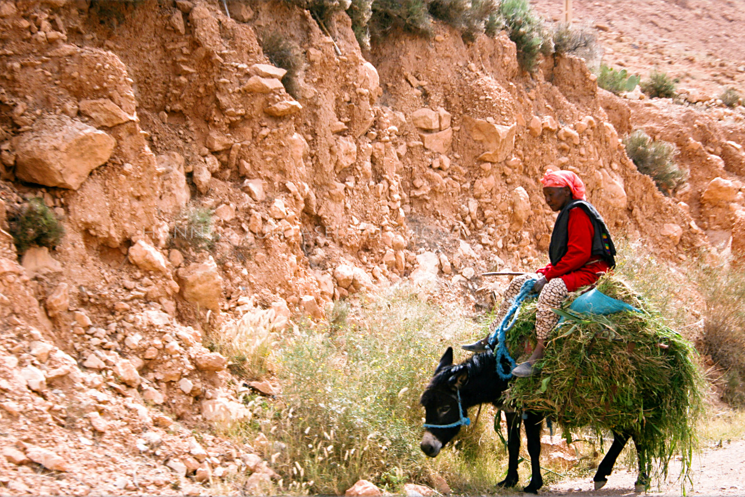 A woman on a donkey in rural Morocco. Tips for Taking Better Pictures from a Moving Vehicle
