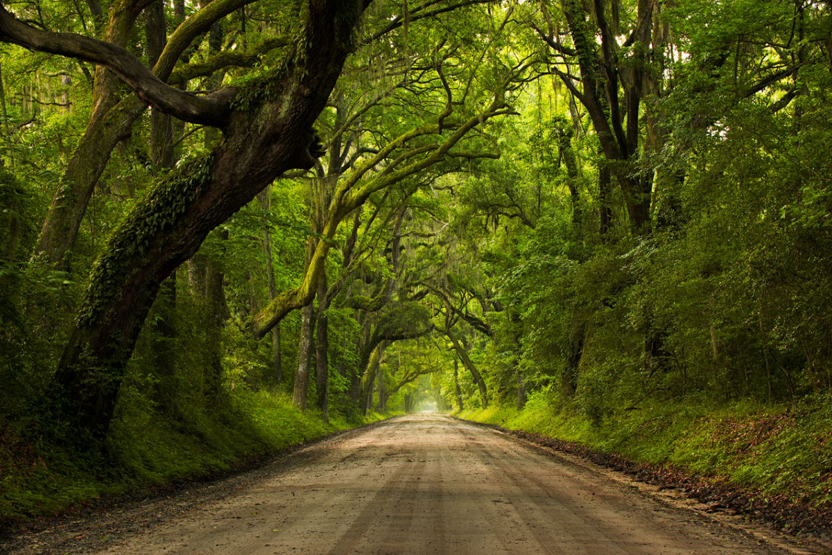 road with big trees arching over - 4 Reasons Why You Aren't Getting Sharp Images