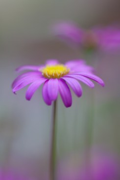 nature-photography-flower-macro