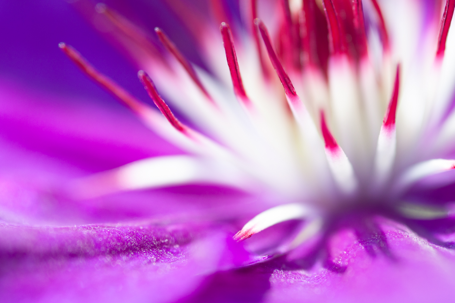 5 Things I Wish I'd Known Before Starting Nature Photography - flower close up