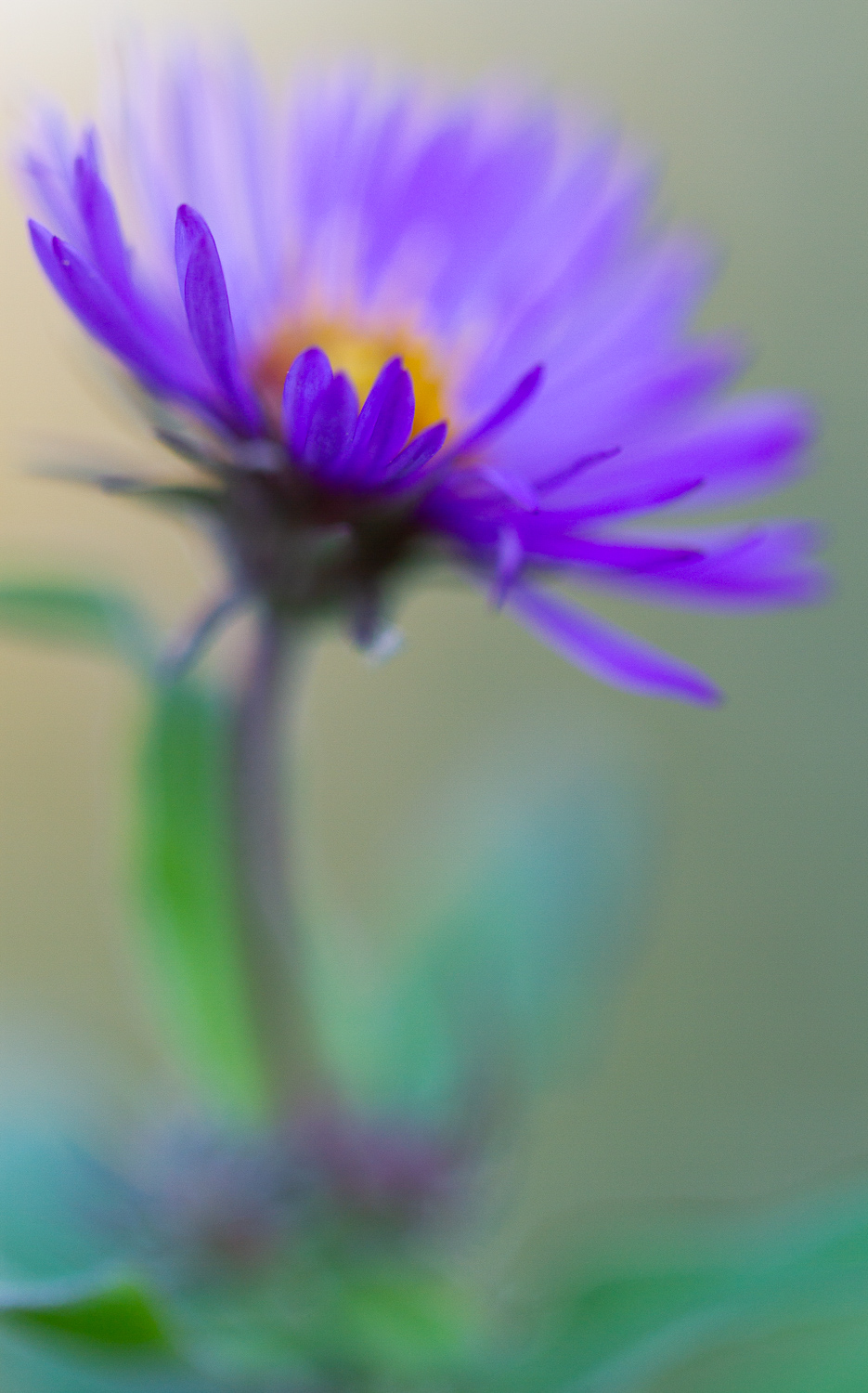 purple flower - 5 Ways to Make Extraordinary Photographs of Ordinary Subjects