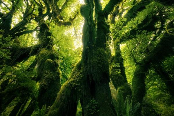 Andrew Helmer - trees