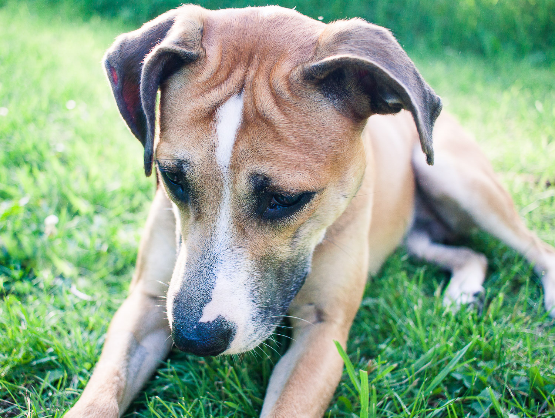 dog - Creative Pet Photography