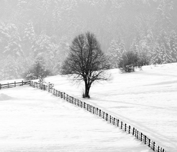 Daniel Hursan - trees