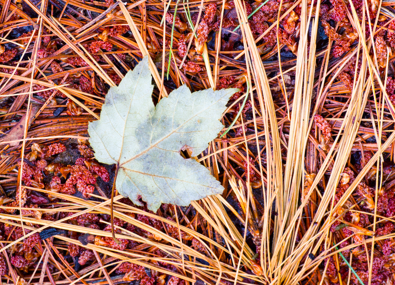 natural light macro leaves