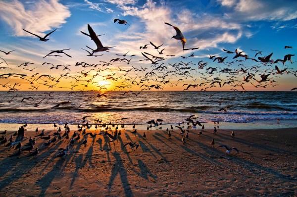 Jennifer Brinkman - sunset
