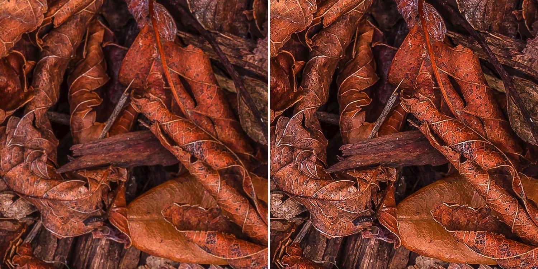 Tack Sharp photos - Leaves
