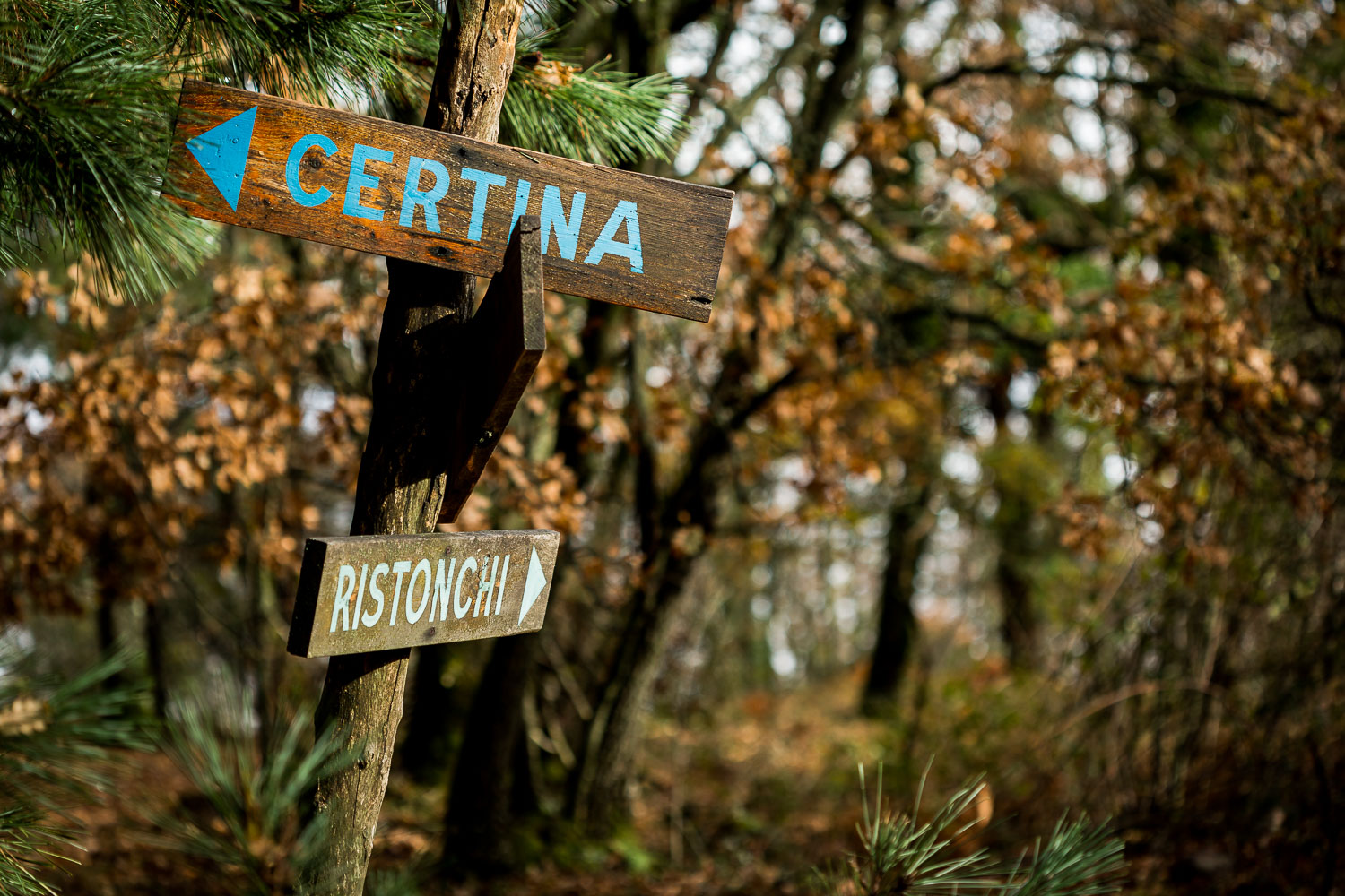 How to Break the World Down into Elements to Create Better Photos - signs in the forest