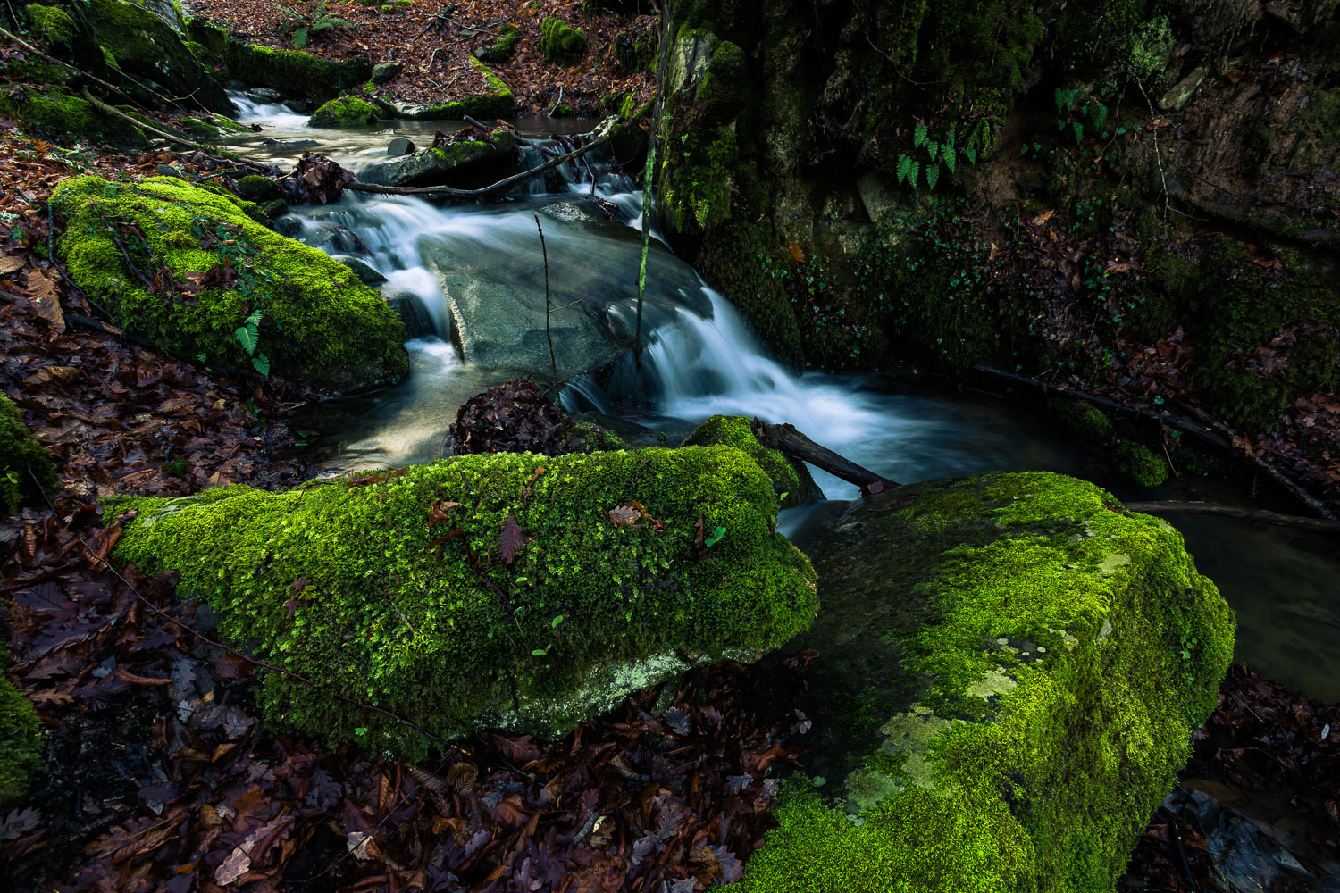 How to Break the World Down into Elements to Create Better Photos - forest stream and mossy rocks
