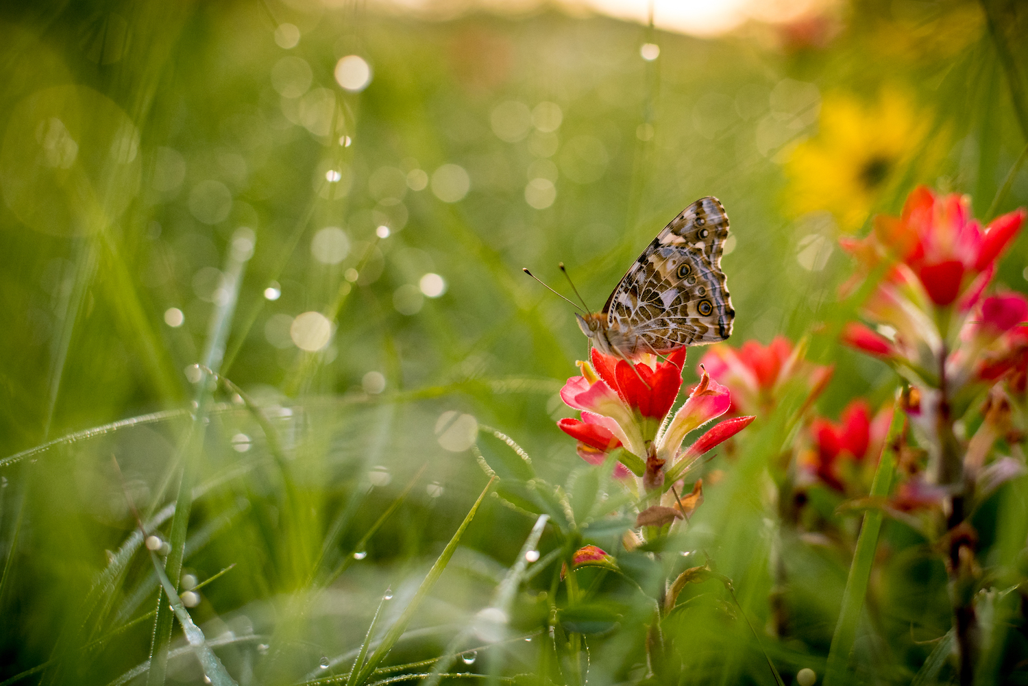 The Importance of Getting the Image Right In-Camera - butterfly on a red flower