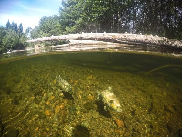 GoPro, Hero5, Underwater,Salmon, Alaska