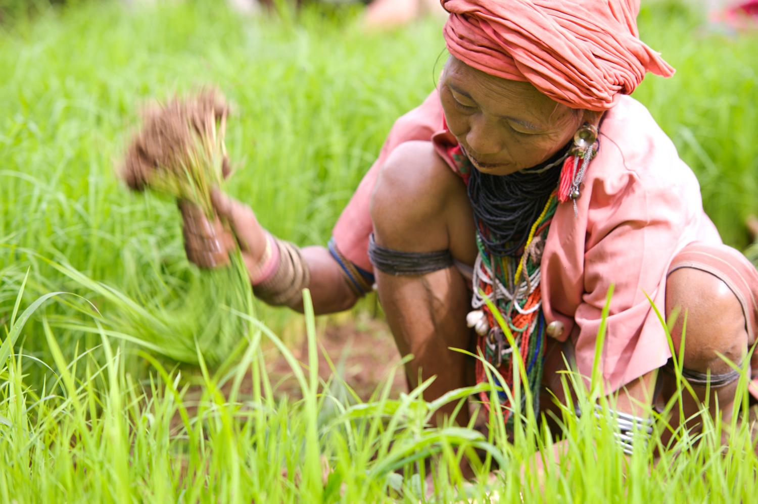 © Kevin Landwer-Johan The Best Kind of People to Photograph While Traveling Transplanting Rice