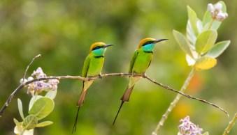 5 Ways to Photograph Birds