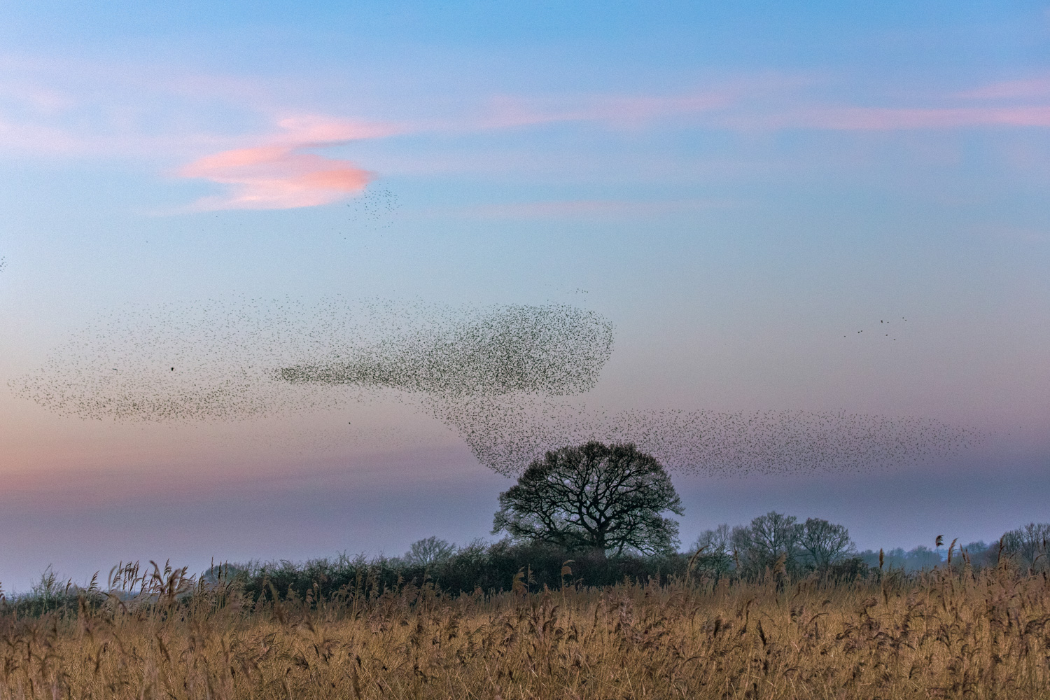 5 Ways to Photograph Birds - flock of birds
