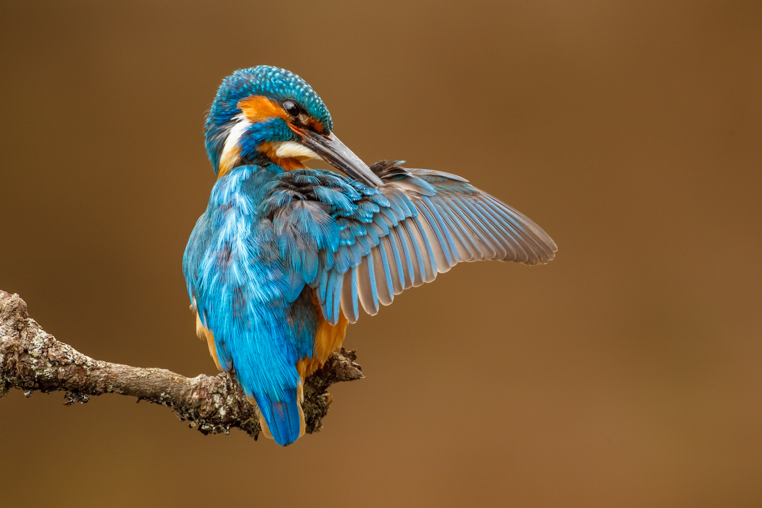 7 Tips for Improving Your Wildlife Photography