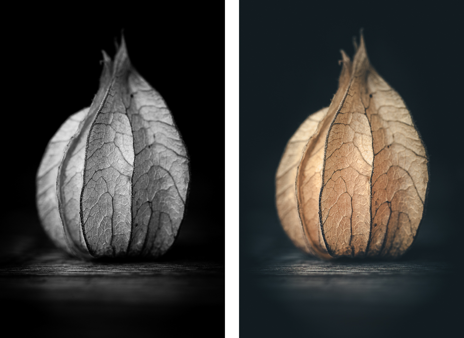 Physalis bw color - How to Create Fine Art Images from the Mundane