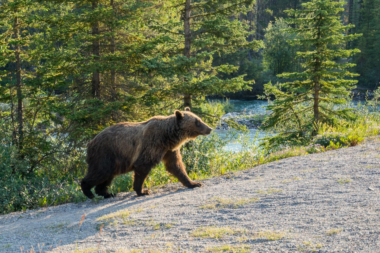 bear how to reverse engineer photos