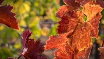 Weekly Photography Challenge – Fall Colors