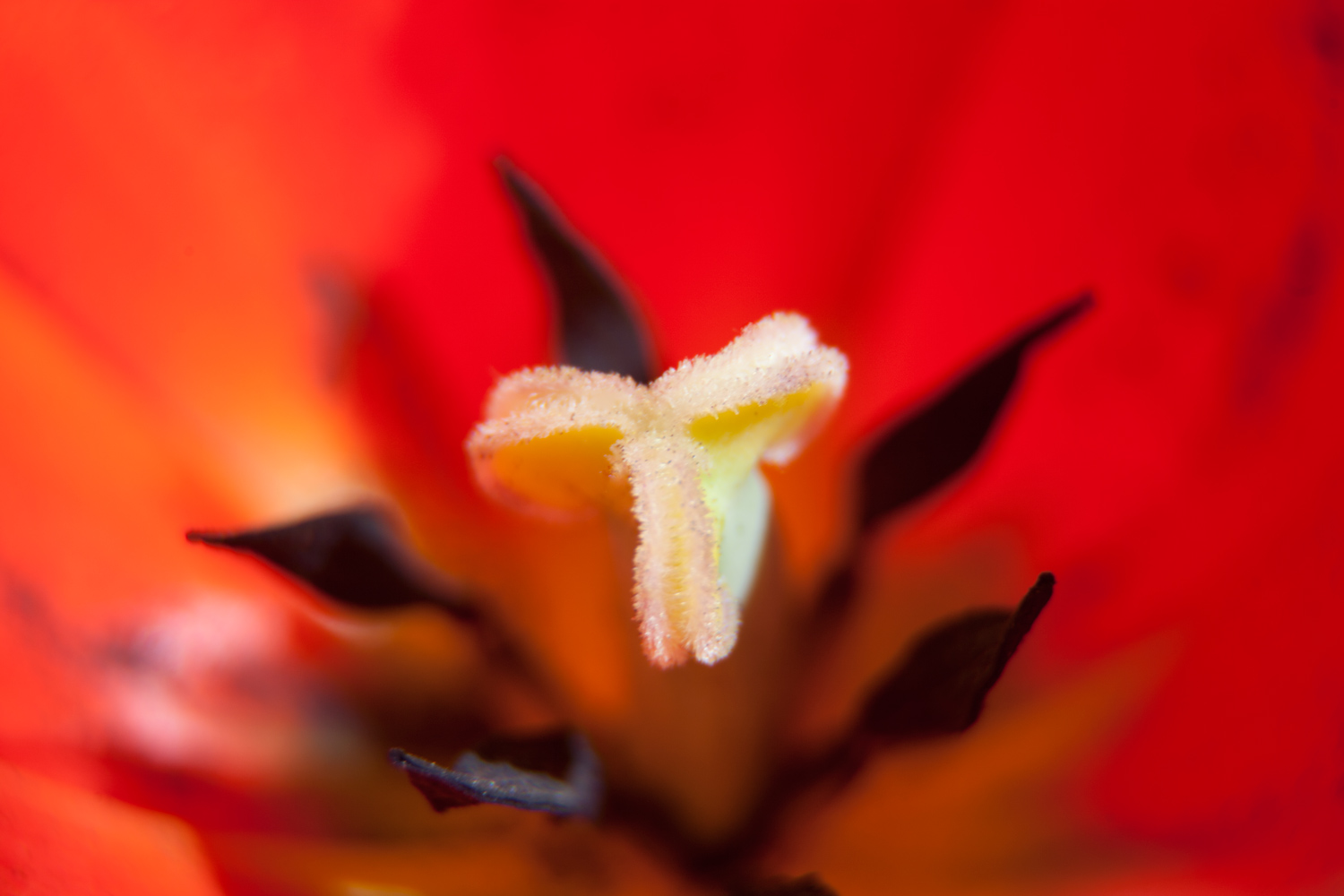 4 - 5 Tips for Photographing Flowers with Impact