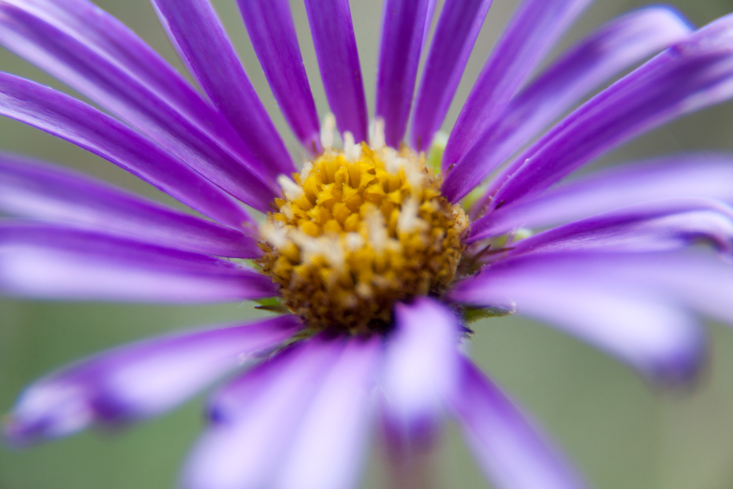 2 - 5 Tips for Photographing Flowers with Impact