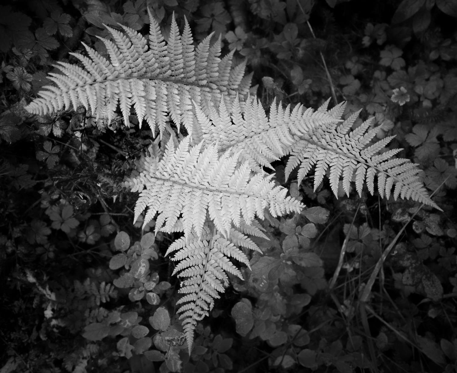 8 - Black and White in the Outdoors