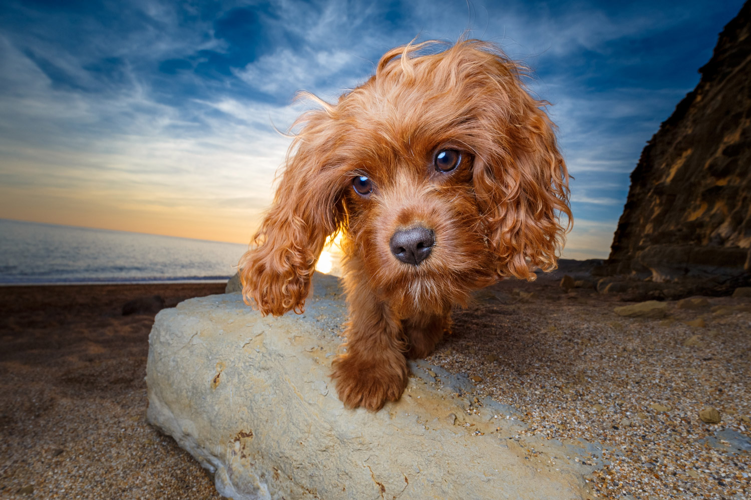 4 of the Best Lenses for Creative Dog Photography 1