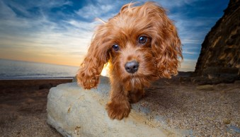 4 of the Best Lenses for Creative Dog Photography